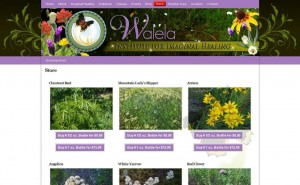 Walela Healing Institute &#8211; Website Design